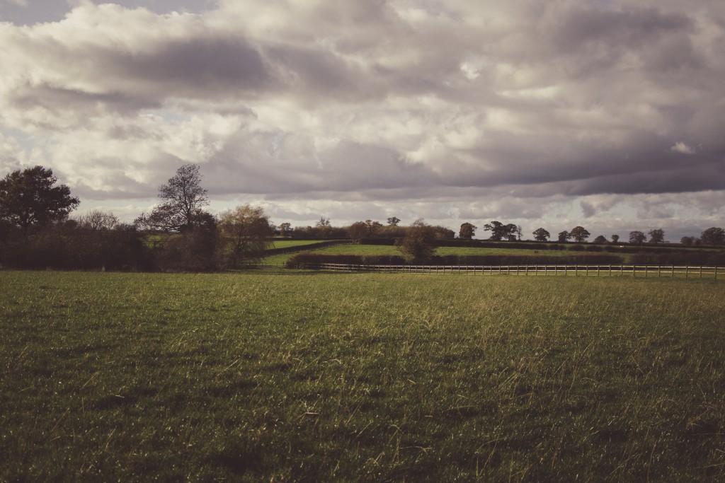 spiky twycross trees field clouds sky sound designer fences