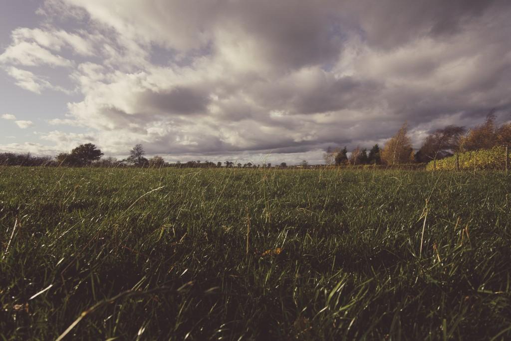 spiky twycross trees field clouds sky sound designer