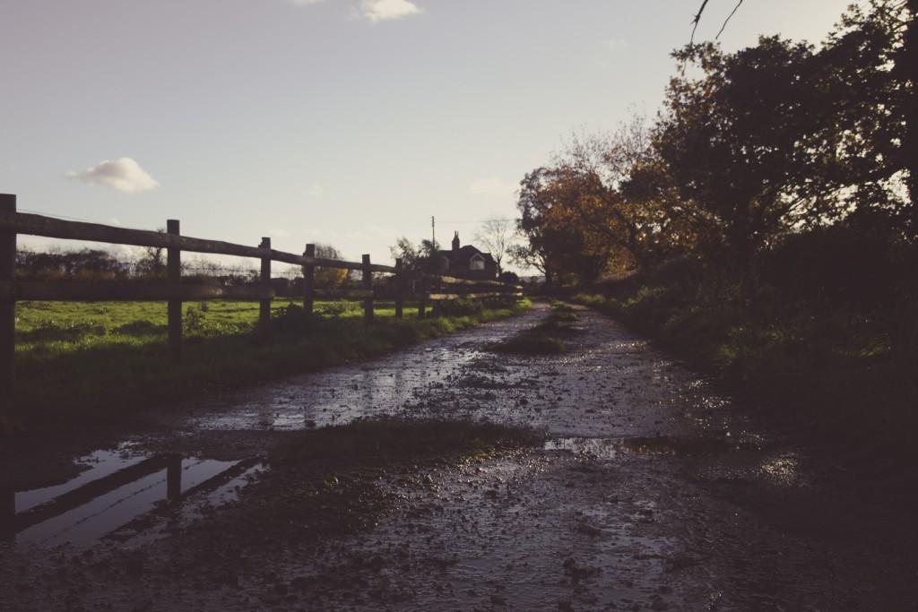 spiky twycross trees path mud wooden fence sound designer