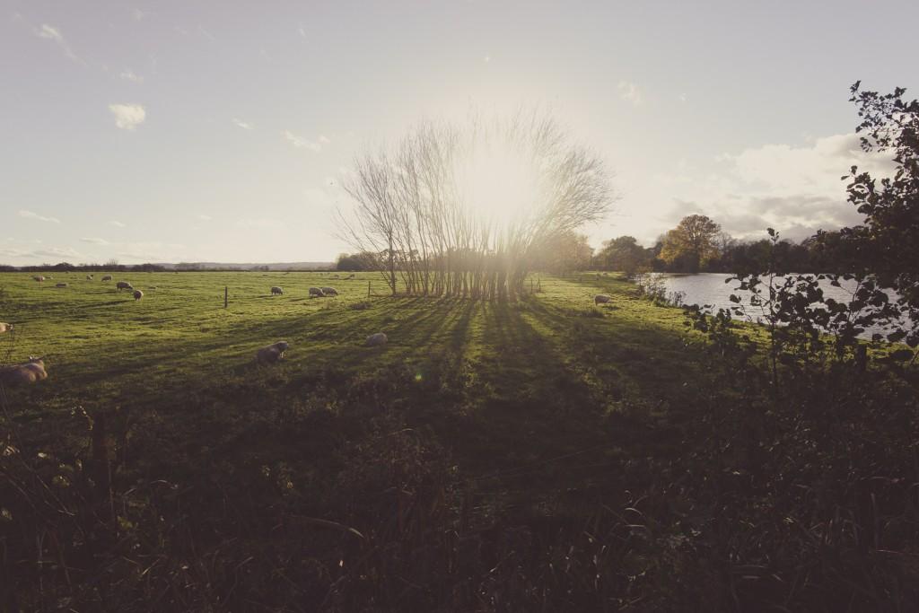 spiky twycross trees sun blooming sound designer