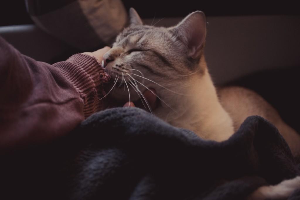 spiky mogwai cat cuddle morning chilling sound designer